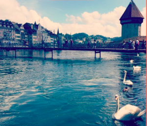 Swans in Switzerland