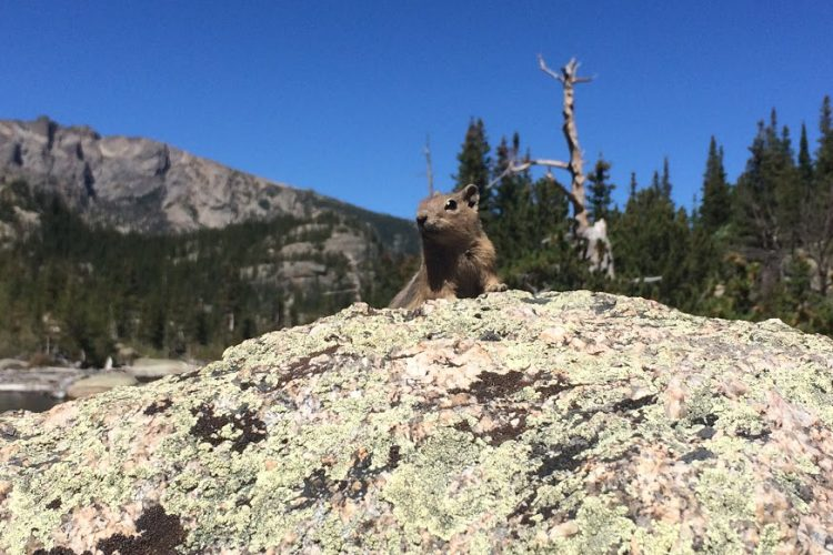 chipmunk in Estes Park