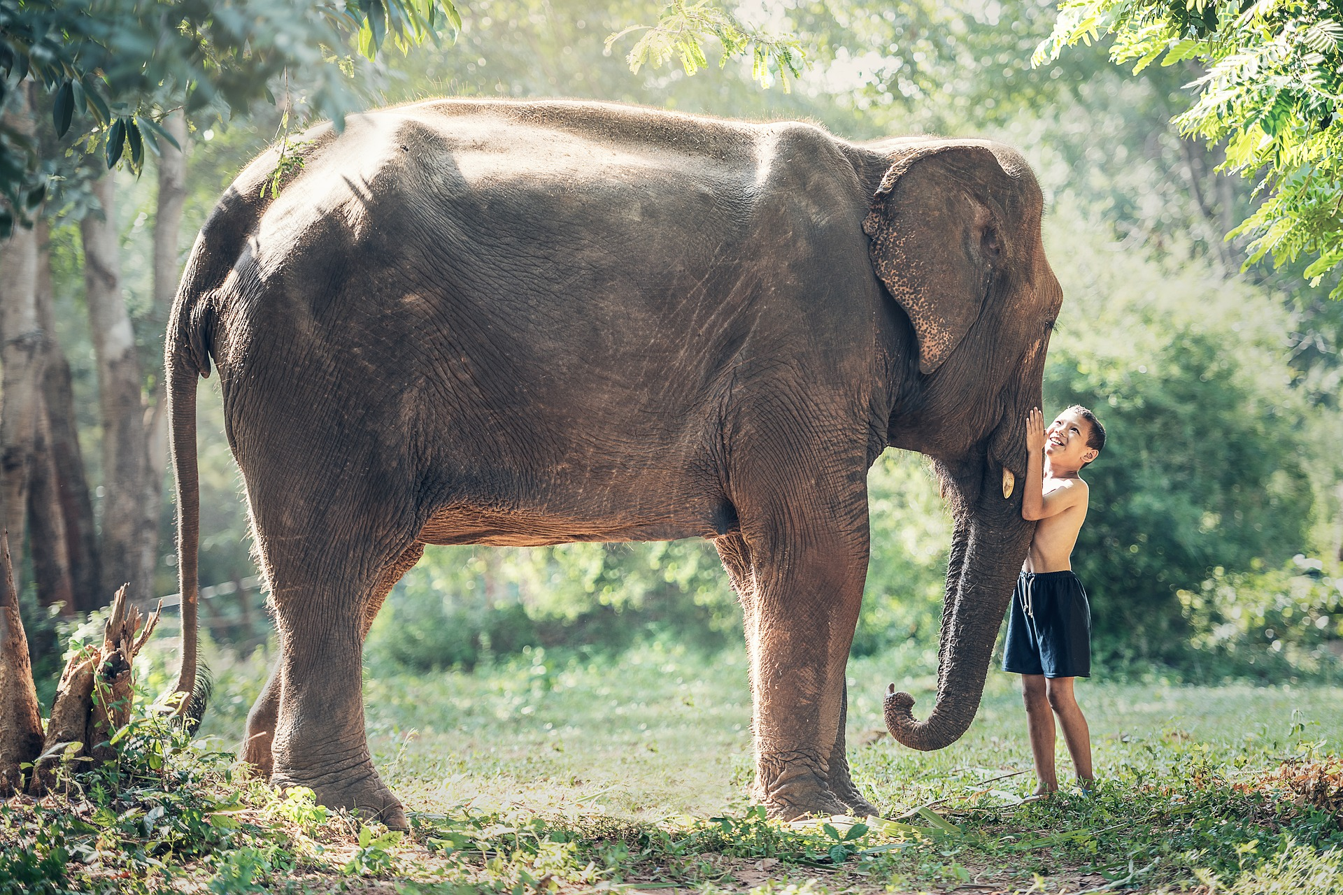 Elephant and young boy