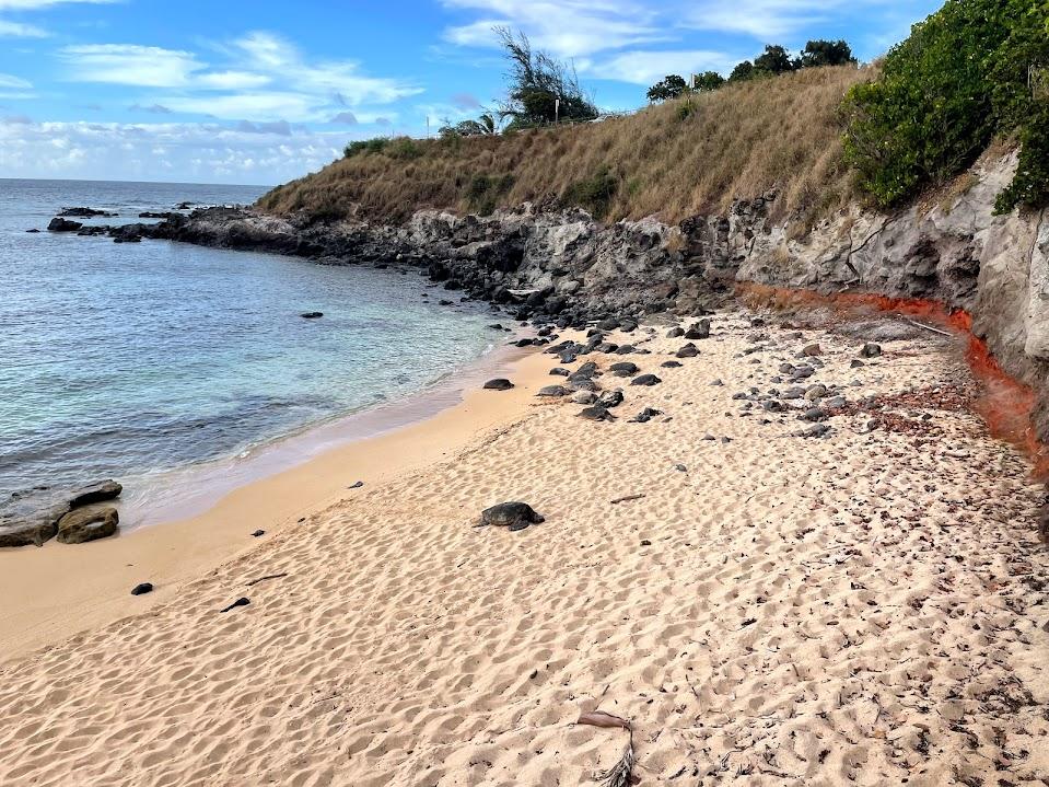 Turtles at Ho'okipa Beach